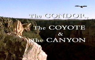 condor,coyote and canyon